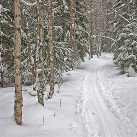 Skiing in Acadia National Park   USA Today