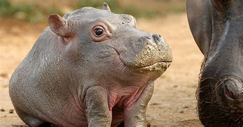 What 13 Animals Would Look Like If They Had No Necks
