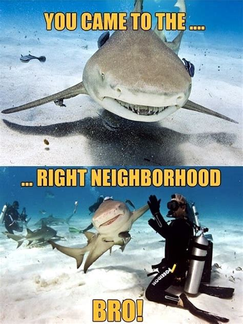 Chomp into these tasty 'Shark Week' memes : theCHIVE