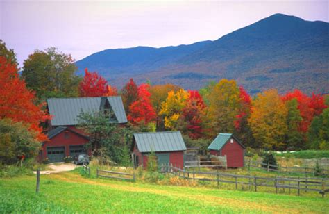 Chocolate-Loving 'Leaf Peepers' Never Far From a Tasty
