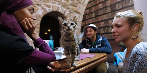 America Is Finally Getting Its First Cat Cafes   HuffPost