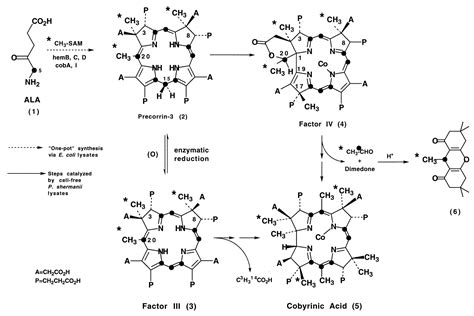 Biosynthesis of vitamin B12: Concerning the identity of