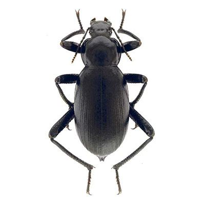 Qatar e-Nature – Categories – Insects