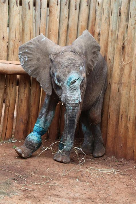 Baby elephant killed before he even learned to use his